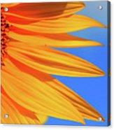 Sunflower Elegance Acrylic Print