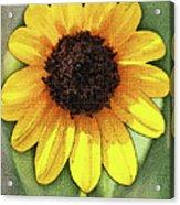 Sunflower Expressed Acrylic Print
