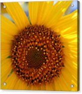 Sunflower Face Acrylic Print
