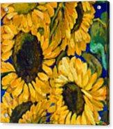 Sunflower Faces Acrylic Print