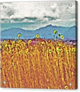 Sunflower Field 1 Acrylic Print