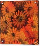 Sunflower Field 1.2 Acrylic Print