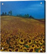 Sunflower Field 3 Acrylic Print