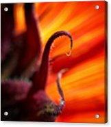 Sunflower Fire 2 Acrylic Print
