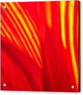 Sunflower Fire 3 Acrylic Print