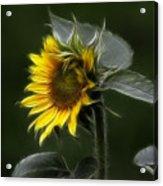 Sunflower Fractalius Beauty Acrylic Print