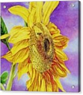 Sunflower Gold Acrylic Print