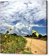 Sunflower Hitchhikers Acrylic Print