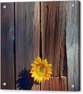 Sunflower In Barn Wood Acrylic Print by Garry Gay