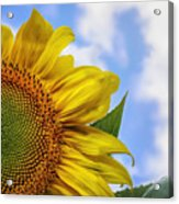 Sunflower In The Clouds Acrylic Print