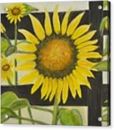 Sunflower In Your Face Acrylic Print