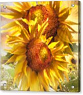 Sunflower Light Acrylic Print
