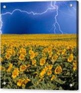 Sunflower Lightning Field  Acrylic Print by James BO  Insogna