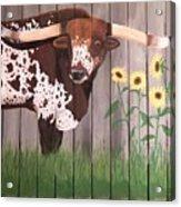 Sunflower Longhorn Acrylic Print