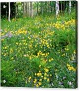 Sunflower Meadow Acrylic Print