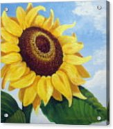 Sunflower Moment Acrylic Print
