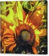 sunflower No. 1 Acrylic Print