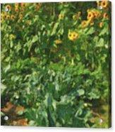 sunflower No.5 Acrylic Print