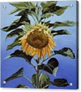 Sunflower Nodding Acrylic Print