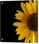 Sunflower Number 3 Acrylic Print