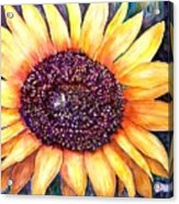 Sunflower Of Georgia Acrylic Print