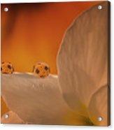 Sunflower On White Flower Acrylic Print