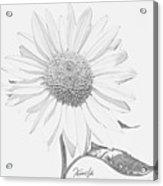 Sunflower  P Acrylic Print