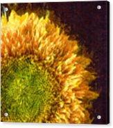 Sunflower Pencil Acrylic Print