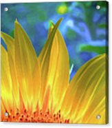Sunflower Sunshine Acrylic Print