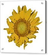 Sunflower T Acrylic Print