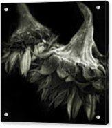 Sunflower Tango Acrylic Print