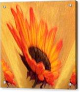 Sunflower To The Sky Acrylic Print by Marsha Heiken