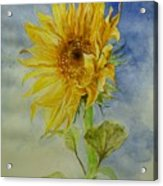 Sunflower Tribute To Van Gogh Acrylic Print