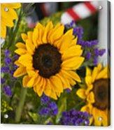 Sunflower Triplets Acrylic Print