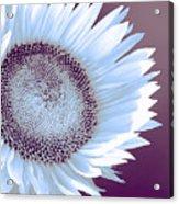Sunflower Starlight Acrylic Print