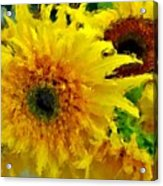 Sunflowers - Light And Dark Acrylic Print