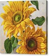 Sunflowers 1 Acrylic Print