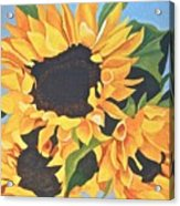 Sunflowers #3 Acrylic Print