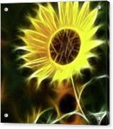 Sunflowers-5200-fractal Acrylic Print
