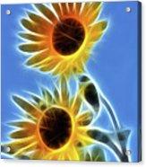 Sunflowers-5246-fractal Acrylic Print