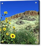Sunflowers And Cliffs Acrylic Print