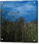 Sunflowers And Corn With Lines Acrylic Print