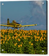 Sunflowers And Crop Duster Acrylic Print