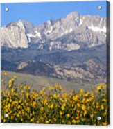 2a6742-sunflowers And Mount Humphreys  Acrylic Print