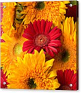 Sunflowers And Red Mums Acrylic Print by Garry Gay