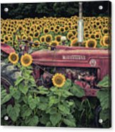 Sunflowers And Tractor Acrylic Print
