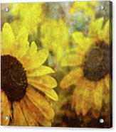 Sunflowers And Water Spots 2773 Idp_2 Acrylic Print