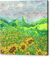 Sunflowers At Lop Burri Acrylic Print