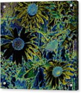 Sunflowers By Wall Acrylic Print