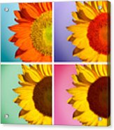 Sunflowers Collage Acrylic Print